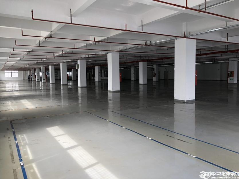 西丽松白路白芒关口原房东仓库厂房4200红本丙级消防