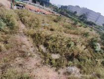 深圳布吉附近8000平红本地皮出售